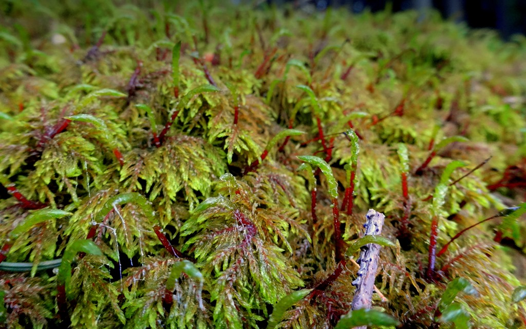 Moss covering everything in Innsbruck