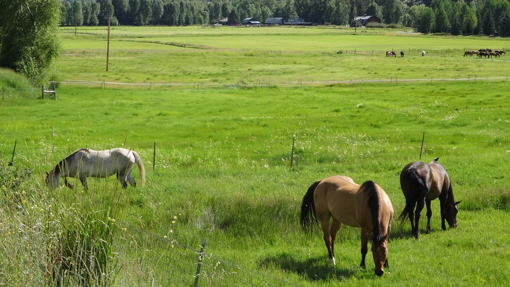 Horses in a meadow, Edwards CO